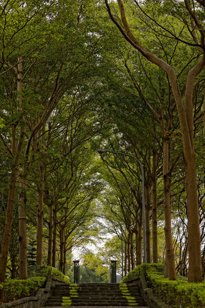 Stone Stair Path Lined with Trees photo