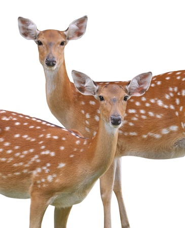 All deer. photo