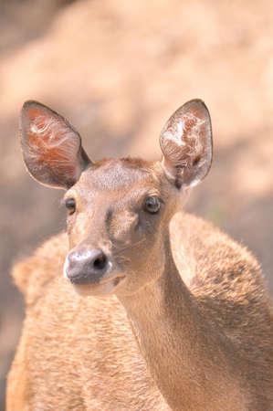 All deer  photo