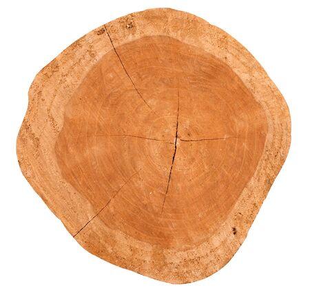 duramen: El duramen es la superficie de oro. Foto de archivo