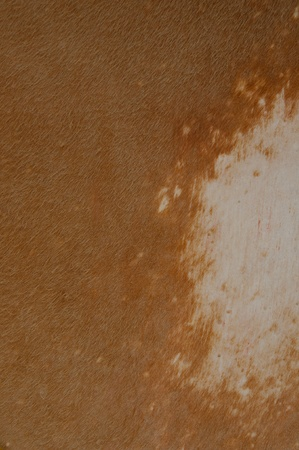 brown grunge textured abstract background for multiple uses Stock Photo