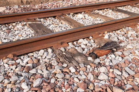 animal tracks: morte delle tracce degli animali.