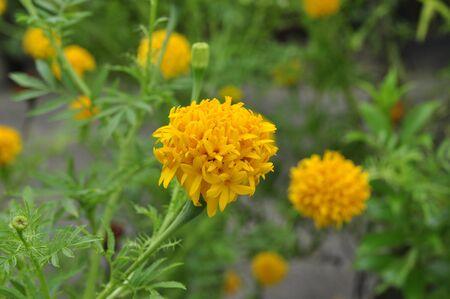 Yellow flowers. Stock Photo - 15431663
