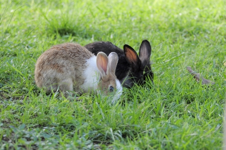 Two rabbits on green grass. photo