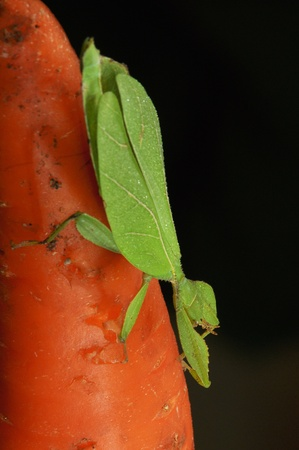 Green grasshopper. Stock Photo - 15880839