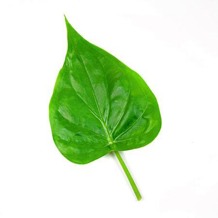 Green leaf isolated white background. Stock Photo - 15880435