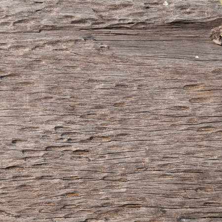 Wood texture for your background Stock Photo - 15969063
