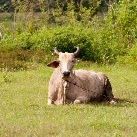 cow pasture river.