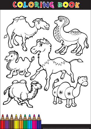 cartoon illustration of dromedary camel for coloring book Vector