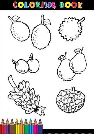 rambutan: Set of Fruit doodle drawings vector.