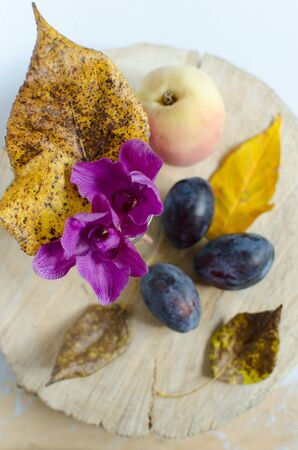 purple leaf plum: Autumn composition from leaves, orchids and fruit Stock Photo