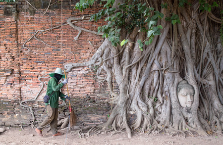 pipal: Head of Buddha statue in pipal tree root at Ayutthay,Thailand and Sweepers garbage cleaning it. Stock Photo