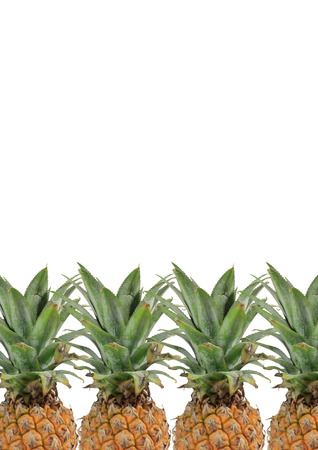 digest: 4 Pineapples with green leaves on white background