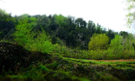 Green on the waterfalls
