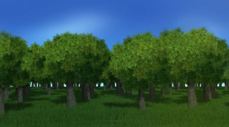 3D green forest trees and grass with blue sky