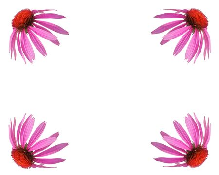 dicot: EchinaceaConeflower design.