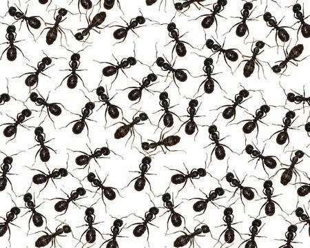 Ants Unleashed photo