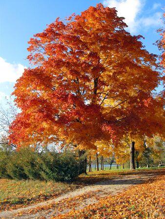 Autumn on a Country Lane Stock Photo - 5804854