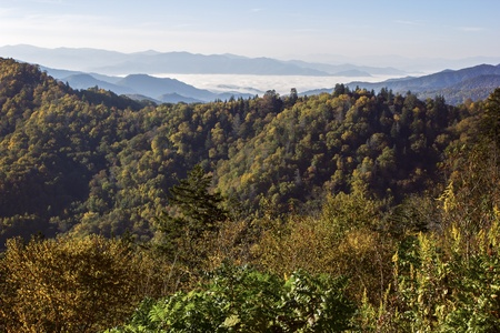 great smoky mountains: Foliage in Great Smoky Mountains National Park in Tennessee. Stock Photo