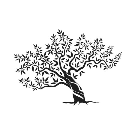 is magnificent: Beautiful magnificent olive tree silhouette icon isolated on white background. Illustration