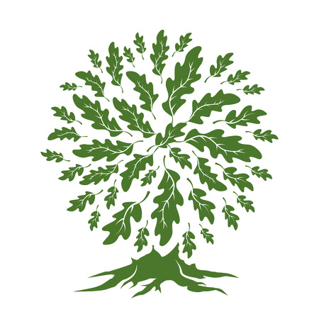 Beautiful green oak tree silhouette isolated on white background.