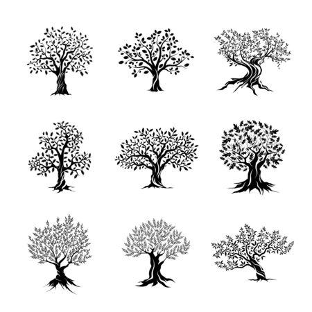 herrlichen Olivenbäumen und Eichen Silhouette