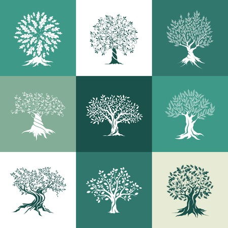 spreading: olive and oak trees silhouette isolated on color background