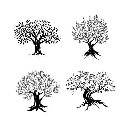 Mooi prachtig olijfboomsilhouet dat op witte achtergrond wordt geïsoleerd. Vector Illustratie