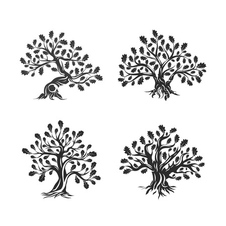 Huge and sacred oak tree silhouettes isolated on white background.