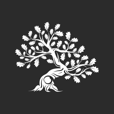 Huge and sacred oak tree silhouette isolated on dark background.