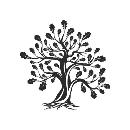 Huge and sacred oak tree silhouette isolated on white background.