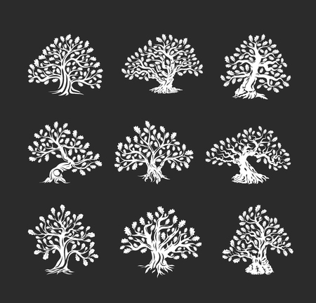 Huge and sacred oak tree silhouette logo isolated on dark background.