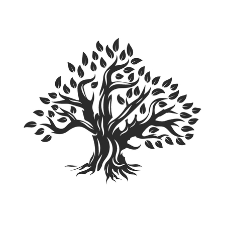 Organic natural and healthy olive tree silhouette  isolated on white background.