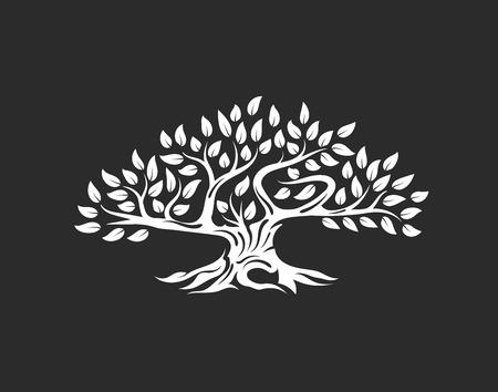 Organische natürliche und gesunde Olivenbaumschattenbild lokalisiert auf weißem Hintergrund.