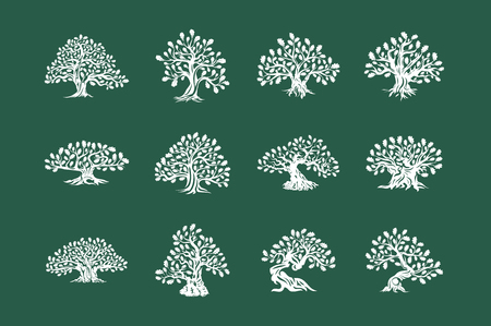 Huge and sacred oak tree plant silhouette icon isolated on green background set.
