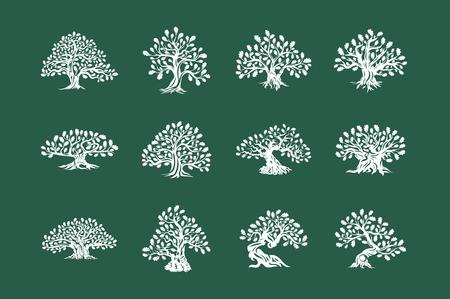 Riesige und heilige Eichenpflanzensilhouetteikone lokalisiert auf grünem Hintergrund eingestellt.