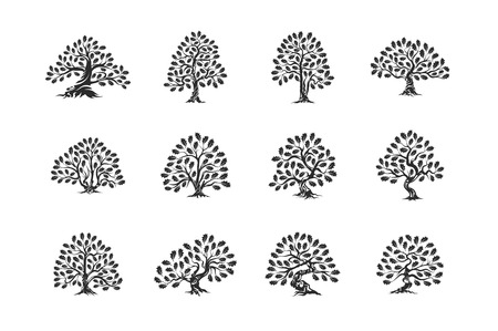 Huge and sacred oak tree plant silhouette icon isolated on white background set.