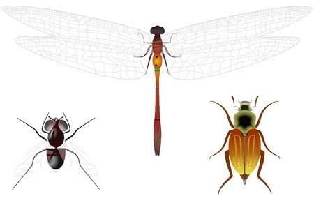 Representatives of insects, fly, dragonfly, bug Stock Photo - 5093032