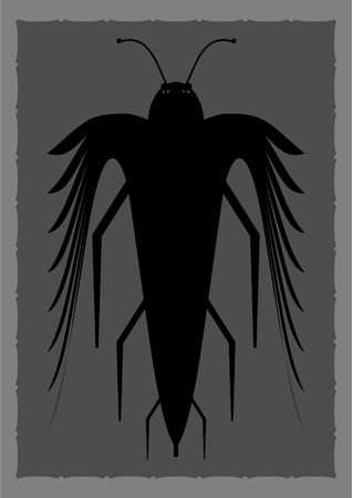.  Unknown species of insect in a frame on a gray background.
