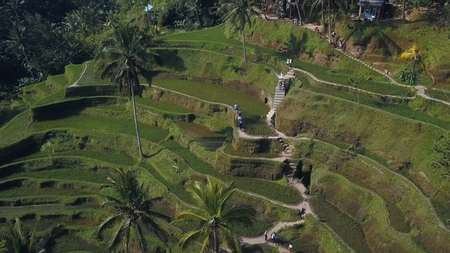 green rice terrace in bali indonesia Stock Photo - 91460813