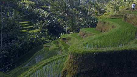 green rice terrace in bali indonesia Stock Photo - 91458836