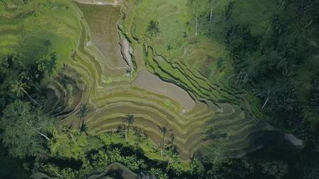 green rice terrace in bali indonesia Stock Photo - 91424020