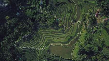 green rice terrace in bali indonesia Stock Photo - 91534157