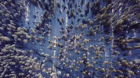 aerial view of the pine trees in the mountains
