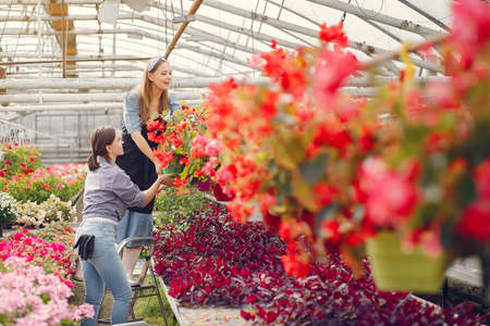 Women working in a greenhouse with a flowerpoots
