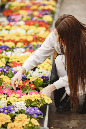 Girl takes care of flowers in a greenhouse in an apron Imagens