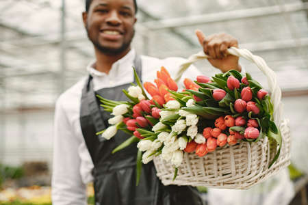 African guy with a basket of tulips in a greenhouse
