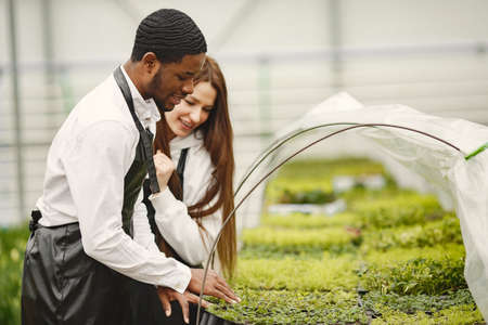 Guy and girl gardeners take care of plants in a greenhouse