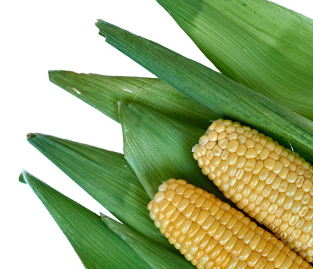 Ears of corn lying on the background of corn leaves. Stock Photo