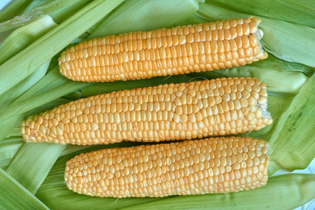 Ears of corn lying on the background of corn leaves. Фото со стока